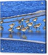 Sandpiper Symmetry Acrylic Print
