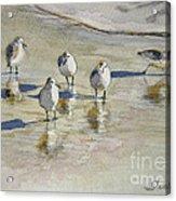 Sandpipers 2 Watercolor 5-13-12 Julianne Felton Acrylic Print