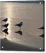 Sandpipers And Seagulls Acrylic Print