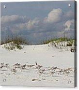 Sandpipers On Dune Acrylic Print