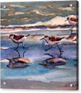 Sandpipers Running In Beach Shade 3-10-15 Acrylic Print
