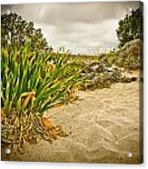 Sands And Grass Of Elafonisi Acrylic Print