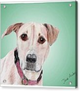 Sandy - A Former Shelter Sweetie Acrylic Print