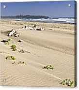 Sandy Beach On Pacific Ocean In Canada Acrylic Print