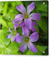 Sandy Creek Wildflowers Acrylic Print
