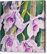 Sandy's Orchids Acrylic Print
