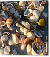 Sanibel Island Shells 4 Acrylic Print