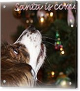 Santa - Christmas - Pet Acrylic Print