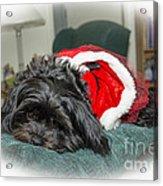 Santa Dog Acrylic Print by Joe McCormack Jr