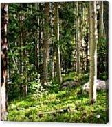 Santa Fe Aspen Woodland Forest Acrylic Print