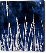 Santa Fe Grass 1 Acrylic Print