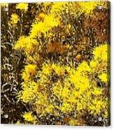 Santa Fe Yellow Acrylic Print