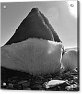 Santa Hat And Shells 2 12/17 Acrylic Print