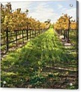 Santa Maria Vineyard Acrylic Print