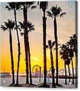 Santa Monica Palms Acrylic Print
