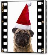 Santa Pug - Canine Christmas Acrylic Print