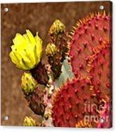Santa Rita Cactus Acrylic Print