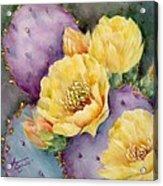 Santa Rita In Bloom Acrylic Print