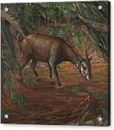 Saola Acrylic Print by ACE Coinage painting by Michael Rothman
