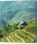 Sapa Rice Fields Acrylic Print