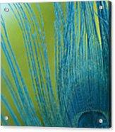 Sapphire 2 Acrylic Print