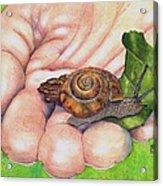 Sarah's Snail Acrylic Print