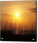 Sarasota Sunset's Acrylic Print by Athala Carole Bruckner