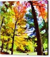 Saratoga Tree Acrylic Print