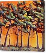 Sardis Pines Acrylic Print