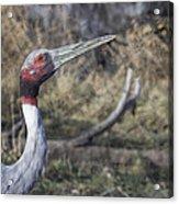 Sarus Crane Acrylic Print