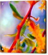 Saturated  Acrylic Print