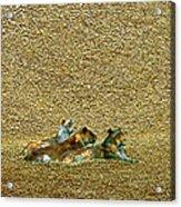 Savannah Queens Acrylic Print