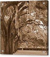 Savannah Sepia - Emmet Park Acrylic Print
