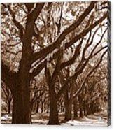 Savannah Sepia - Glorious Live Oaks Acrylic Print