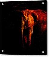 Save The Elephant Acrylic Print