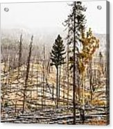 Sawback Burn, On Bow Valley Parkway Acrylic Print