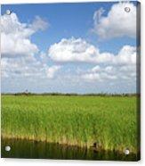 Sawgrass In The Florida Everglades Acrylic Print