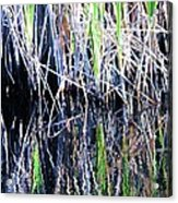 Sawgrass Reflections Acrylic Print
