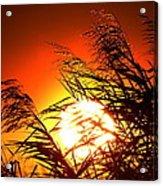 Sawgrass Sunset  Acrylic Print