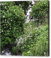 Sawpit Creek Acrylic Print