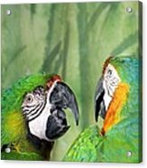 Say What? You Grounded Me For Flirting With Chick Named Daisy? Acrylic Print