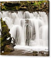 Scaleber Force Close Up Acrylic Print