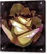 Scanned Rose Water Color Digital Photogram Acrylic Print