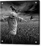Scarecrow And Black Crows Over A Cornfield Acrylic Print