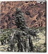 Scarecrow Cactus Acrylic Print