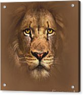 Scarface Lion Acrylic Print by Robert Foster