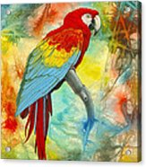 Scarlet Macaw In Abstract Acrylic Print