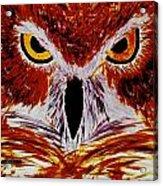 Scarlet Owl Acrylic Print
