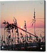 Scarlet Sunrise Acrylic Print