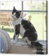 Scarlow Sitting In The Window Acrylic Print